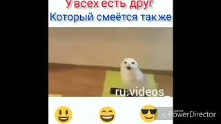 Приколы с животными и детьми. Смешные видео с кошками и собаками. Угарные ролики. Пранки. Юмор.