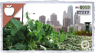 Why We Should Be Urban Farming..watch this!