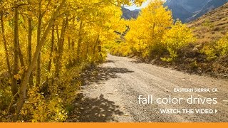 Fall Color Scenic Drives near Mammoth Lakes