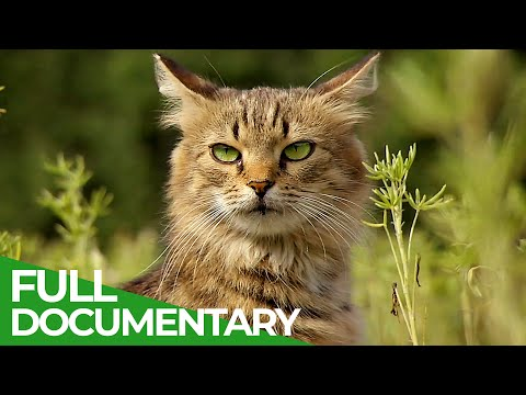Wildlife Takeover: How Animals Reclaimed Chernobyl | Free Documentary Nature