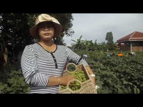Video BUDIDAYA EDAMAME VARIETAS 09 DI BBLM YOGYAKARTA