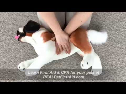 Pet First Aid & CPR Class Training: APCPR™, modern BLS ...