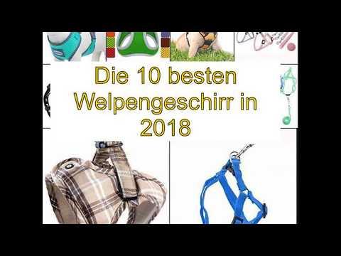 Die 10 besten Welpengeschirr in 2018