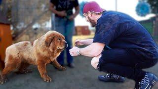 Visiting the Dog that Killed Maverick