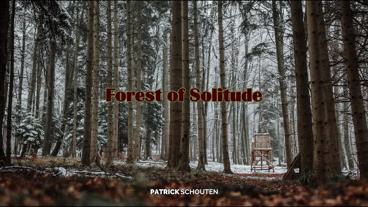 Forest of Solitude