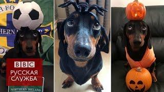 Собака держит на голове разные вещи