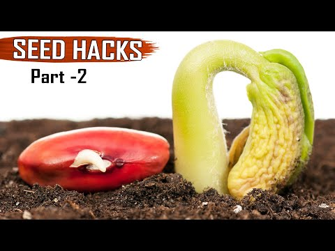 GARDEN TIPS(Hacks): TOP 25 Seeds & Seedlings Gardening Hacks DIY Ideas tricks Compilation – Part 2