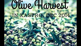 Olive Harvest in Kastro, Dec 2014