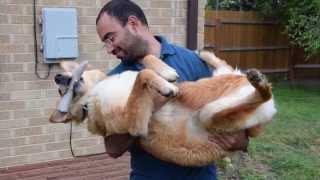 Petstages Deerhorn Игрушка для собак Олений рог малый