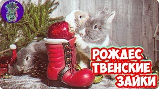 РОЖДЕСТВЕНСКИЕ ЗАЙКИ   Ананас TV   # 36