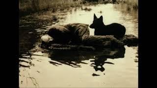 Оператор «Сталкера» о собаке на съемочной площадке. Развенчание мифа!