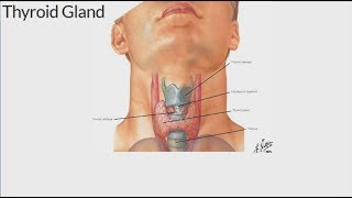 Head and neck surgeon discusses thyroid cancer and symptoms, other disorders