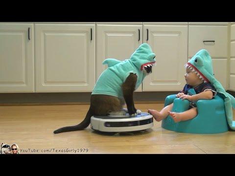 Filmpje: SharkCat houdt baby bezig