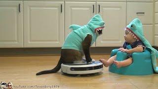 Смотреть онлайн Кот в костюме акулы катается по кухне