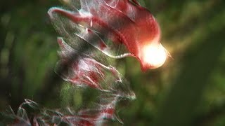 Maya and Fusion Tutorial Now Available: Creating an Abstract Forest Entity Using KRAKATOA