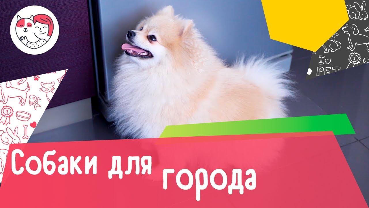 10 пород собак, которые идеально подходят для жизни в городе