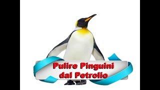 Pulire i Pinguini dal Petrolio