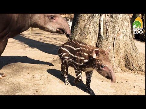 állatkert gél ízületekhez)