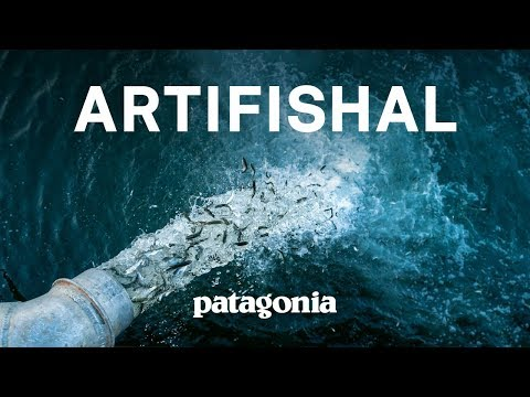 Artifishal (Full Film)   The Fight to Save Wild Salmon