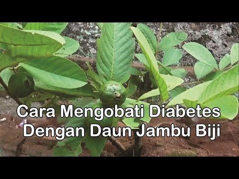 """Video """"Obat Diabetes Herbal"""" - Cara Mengobati Diabetes Dengan """"Manfaat Daun Jambu Biji"""""""