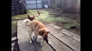 собака прет кота