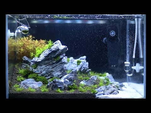 Setup Nature Aquarium Step-by-step