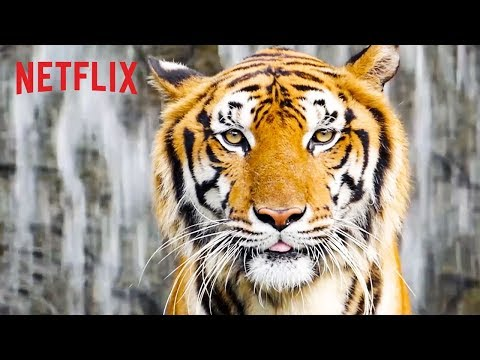 Best of Netflix Nature Docs | Happy Earth Day