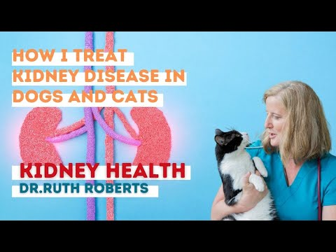 Video Dr. Ruth Roberts: How I treat kidney disease in dogs and cats.