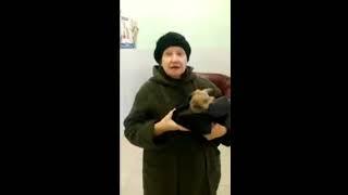 Отзыв ветеринарная клиника «Ветсовет» в Санкт Петербурге
