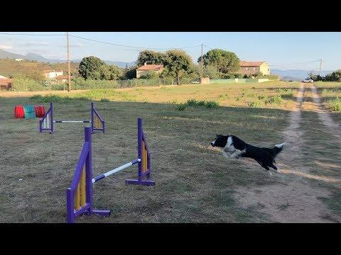VIDÉO. L'agility, un sport de complicité entre le maître et son chien