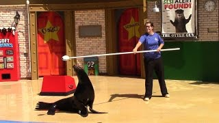 Sea Lion and Otter Educational Presentation