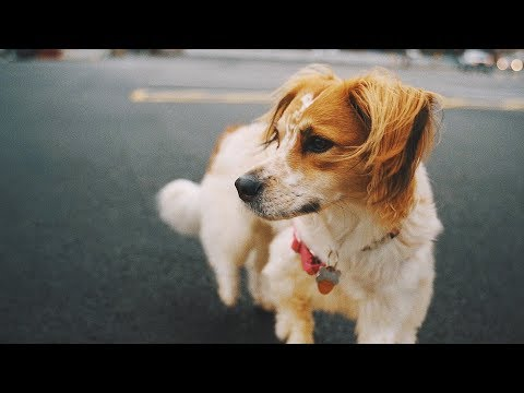 A Walk to the Park | Sony A7III + SLRMagic Microprimes