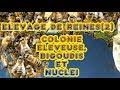 Fred l'Apiculteur - Elevage de reines - 2ème partie - Colonie éleveuse, ...