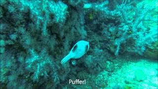 Dykning Ved Similan Islands Dag 3