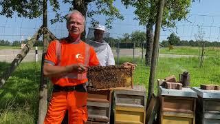 Wir schützen unsere Bienen!