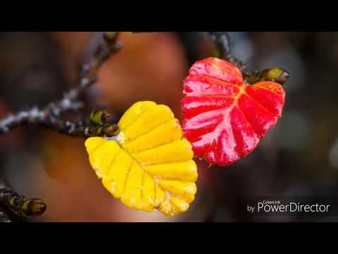 желтый листок