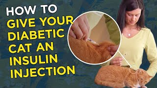 When to give insulin shots for cats