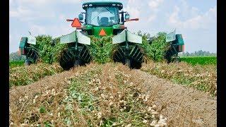 Как выращивают арахис американские фермеры