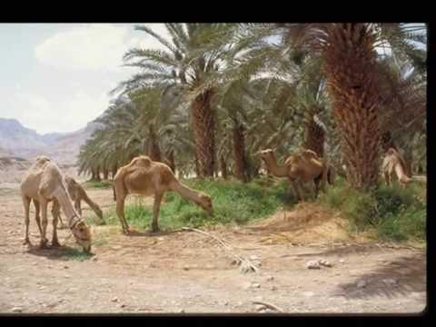 Israel @60,Dead Sea/Masada/Ein Gedi, Celebrating Israel @60