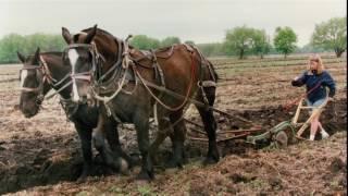Legacy Of The Percheron Horse In America