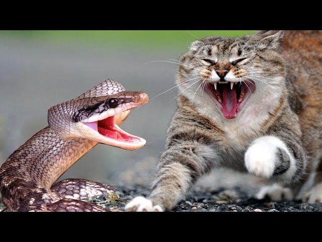 天敵 動物