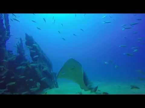 Mergulho nos Naufrágios de Maceió