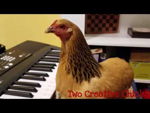 Patriotic Chicken Playing