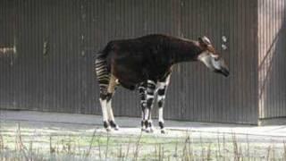 Funny Van Dannen Okapiposter Chords