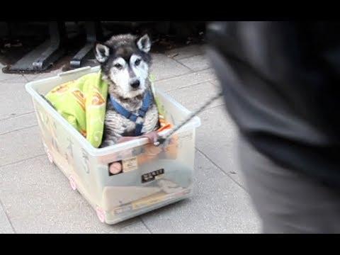 Anteprima Video Prendersi cura di un Cane anziano