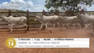 17 NOVILHAS NELORE/ 10 FÊMEAS PRENHES