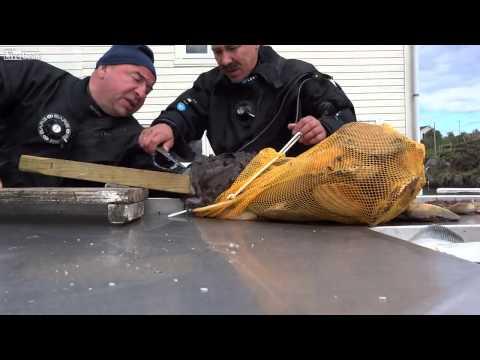 Il silicone si ferma per ristorarsi per pescare in un vibrotail