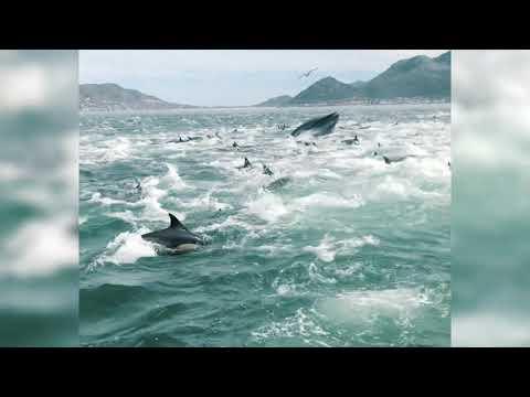 Visbonanza vir dolfyne en walvisse