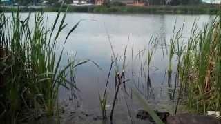 Ловля щуки на реке вьюнка новый милет