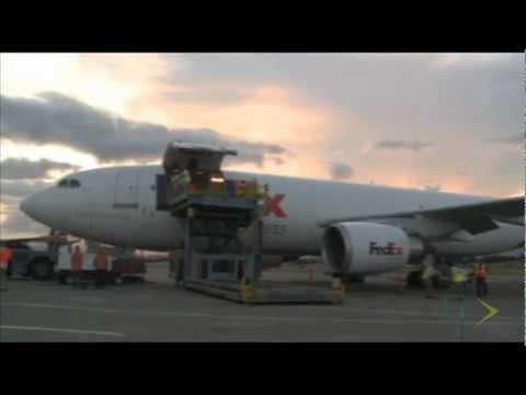 FedEx realiza transporte de leoas entre o Panamá e os EUA